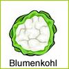 blumenkohl-beet
