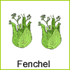 fenchel-beet