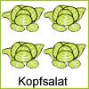 kopfsalat-beet