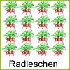 radieschen-beet