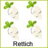 rettich-beet