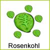 rosenkohl-beet